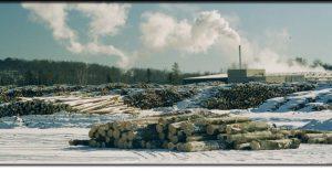 murray lumber